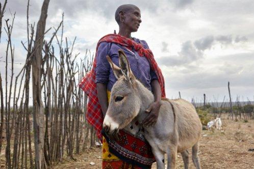 Kenya Donkey Community Crisis