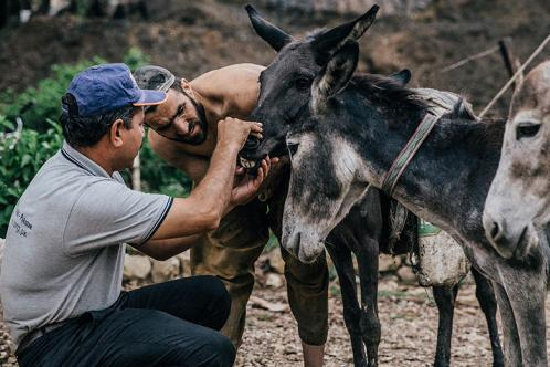 A Brooke vet and owner check over a working animal
