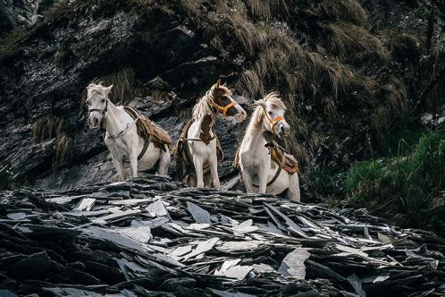 Slate mine horses