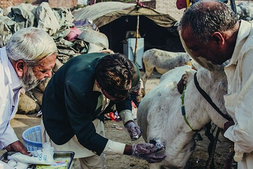 Owners equipped with medical kits tend to an animal