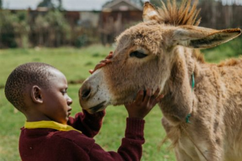 Boy with his donkey