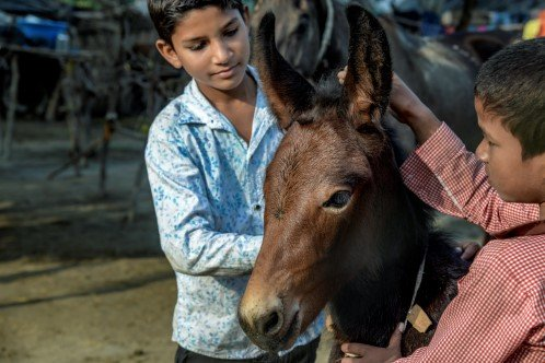 Two boys with donkey