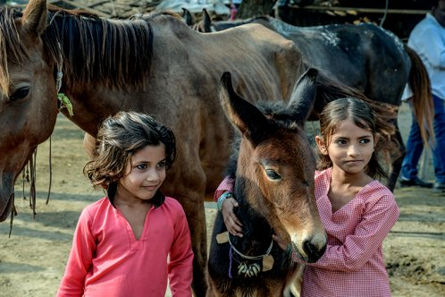 Two girls and a young horse