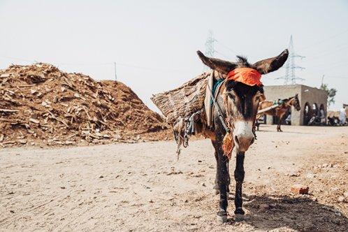 Donkey in a brick kiln in Pakistan
