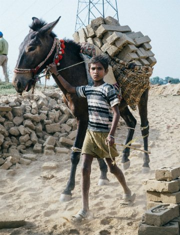Young boy leads brick carrying donkey in India