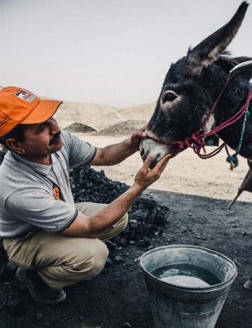 Dr Rab Navaz examines coal mine donkey