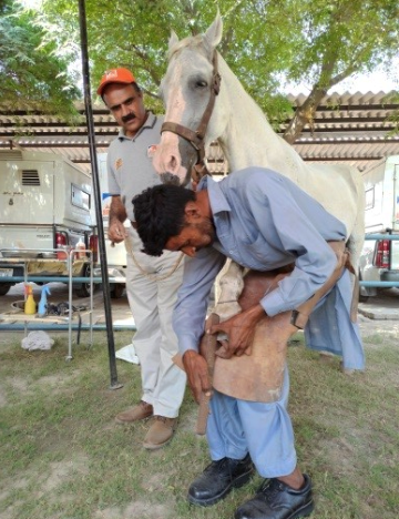 Veterinarian training street farriers on compassionate handling and farriery skills