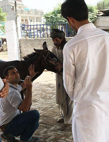 Brooke Pakistan vet Dr Manuchahar Ali mentoring a local animal healthcare provider