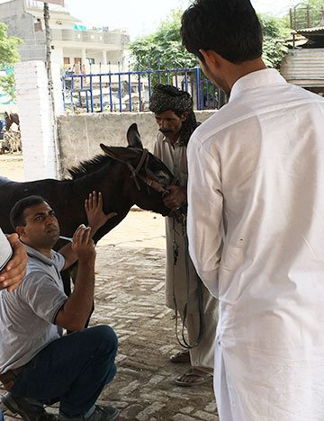 Brooke Pakistan vet Dr Manuchahar Ali mentoring a local animal healthcare provider