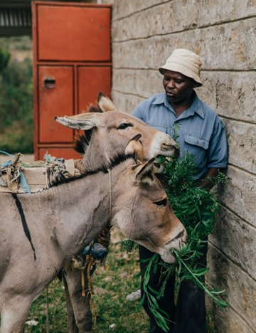 A man and his donkeys