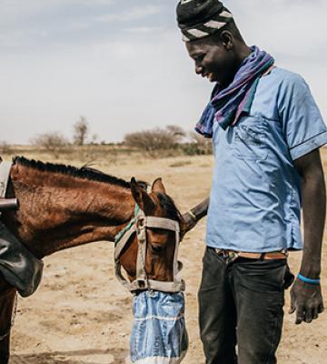 Senegal man feeding horse