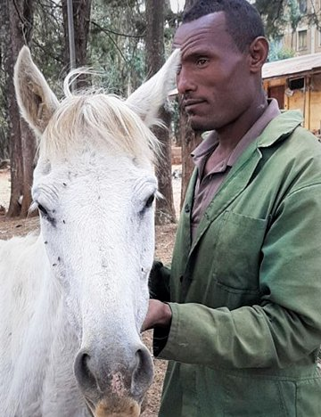 Molalign - a garry horse in Ethiopia