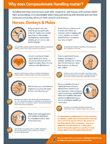 Compassionate equine handling factsheet