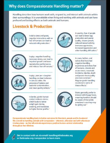 Compassionate livestock handling factsheet