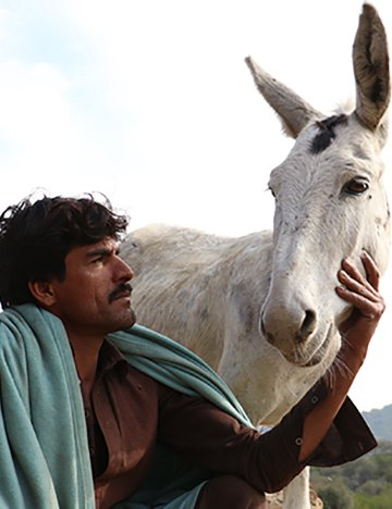 Man with donkey in Pakistan