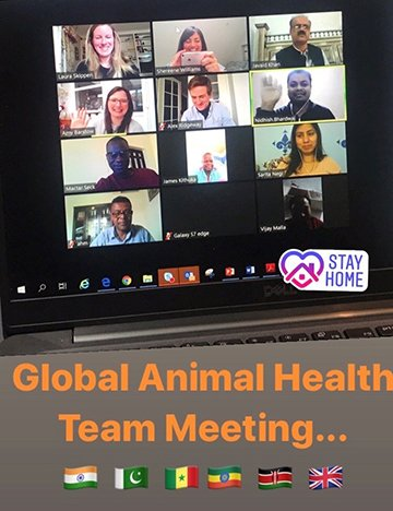 Vets video conferencing